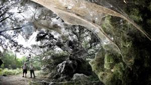 Lake-Tawakoni-State-Park-teia-de-aranha