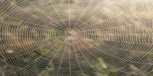 teia-de-aranha-no-posto-640x320